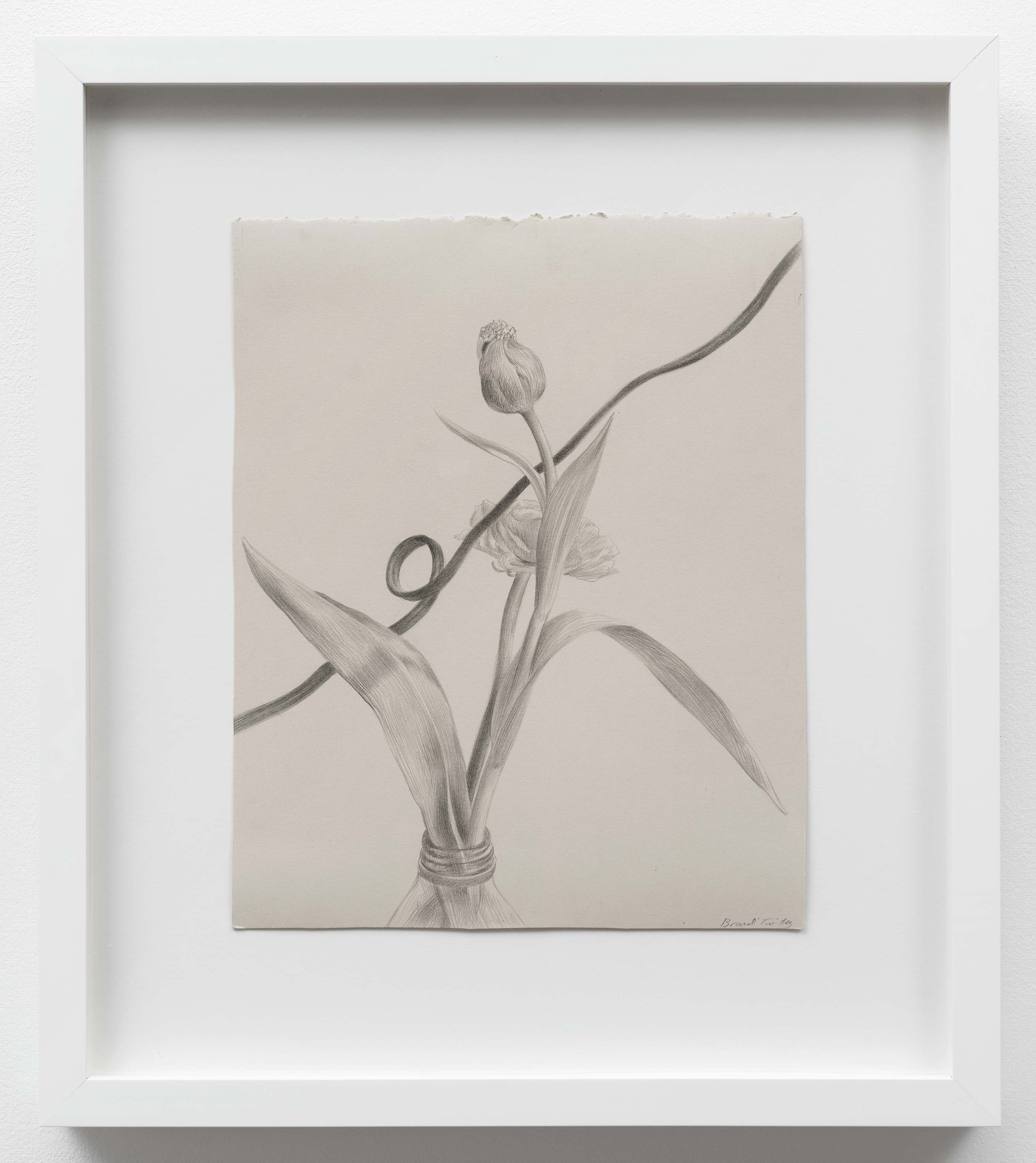 Brandi Twilley<br>Flowers with Cord II<br>2014<br>Graphite on gray paper<br>9 x 11 inches (23 x 28 cm)